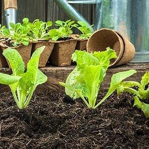 ландшафтный дизайн под ключ. Уход и содержание сада. Строительство беседок и барбекю под ключ.