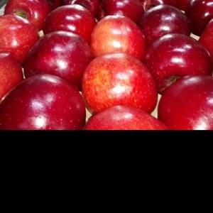 Разнорабочие на сбор яблок